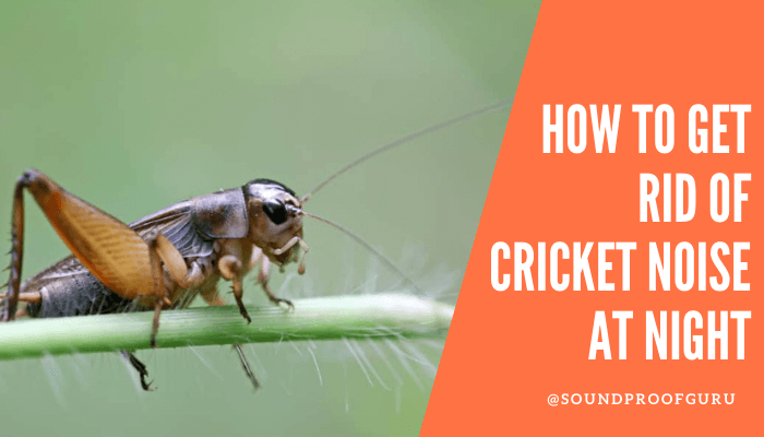 how to get rid of cricket noise at night